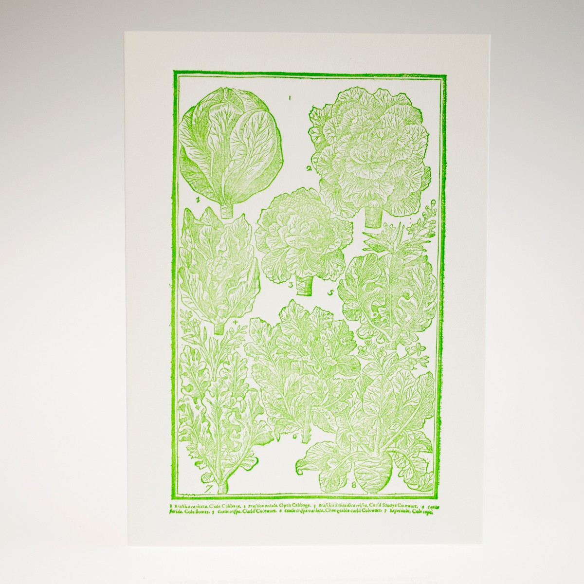 Photo of Cabbages Letterpress Greeting Card