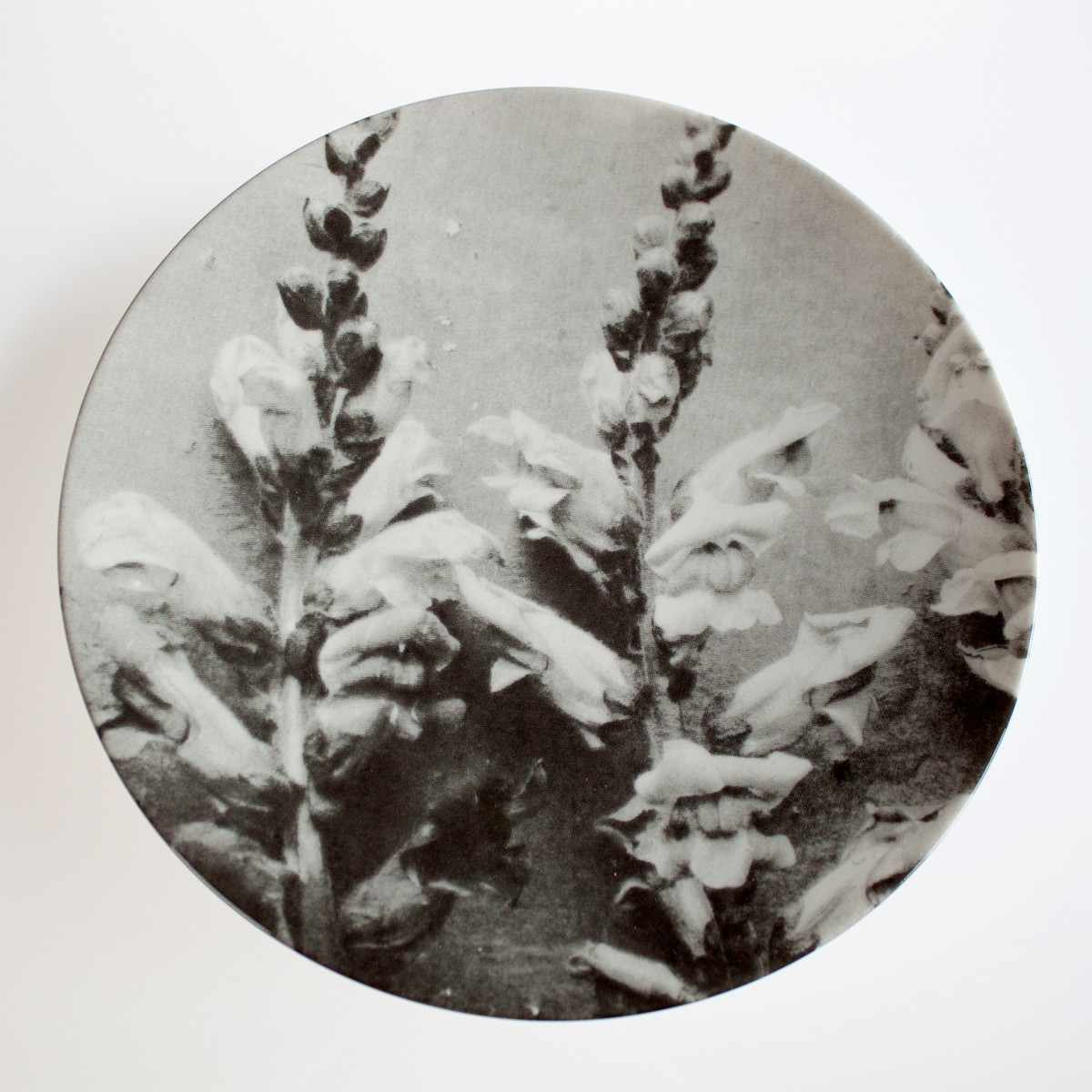Photo of Ancient Flower Plate