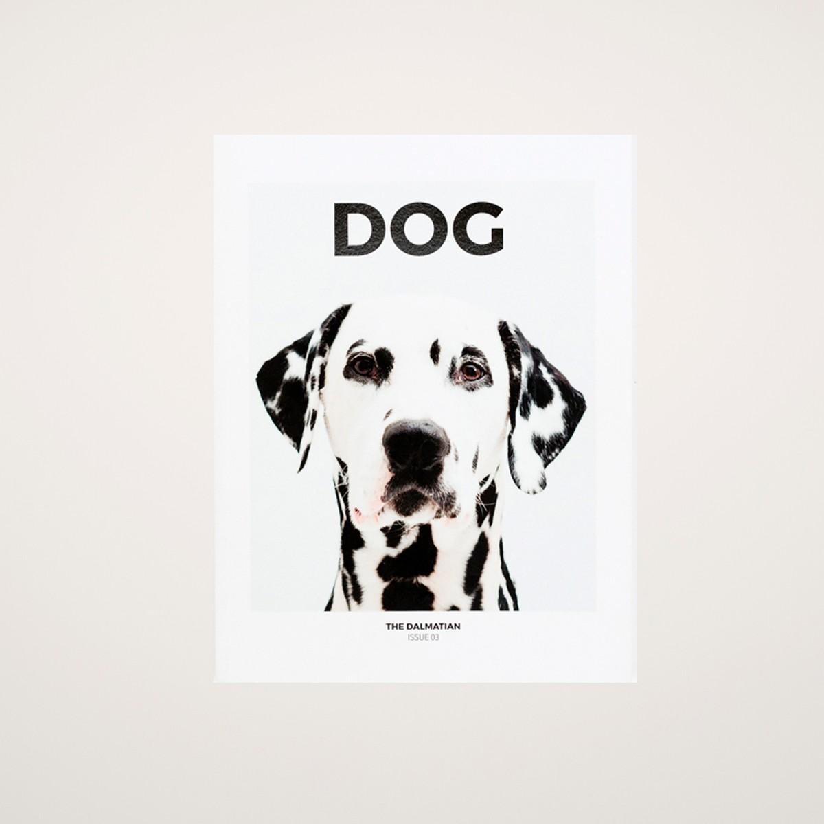 Photo of Dog Magazine Issue 3