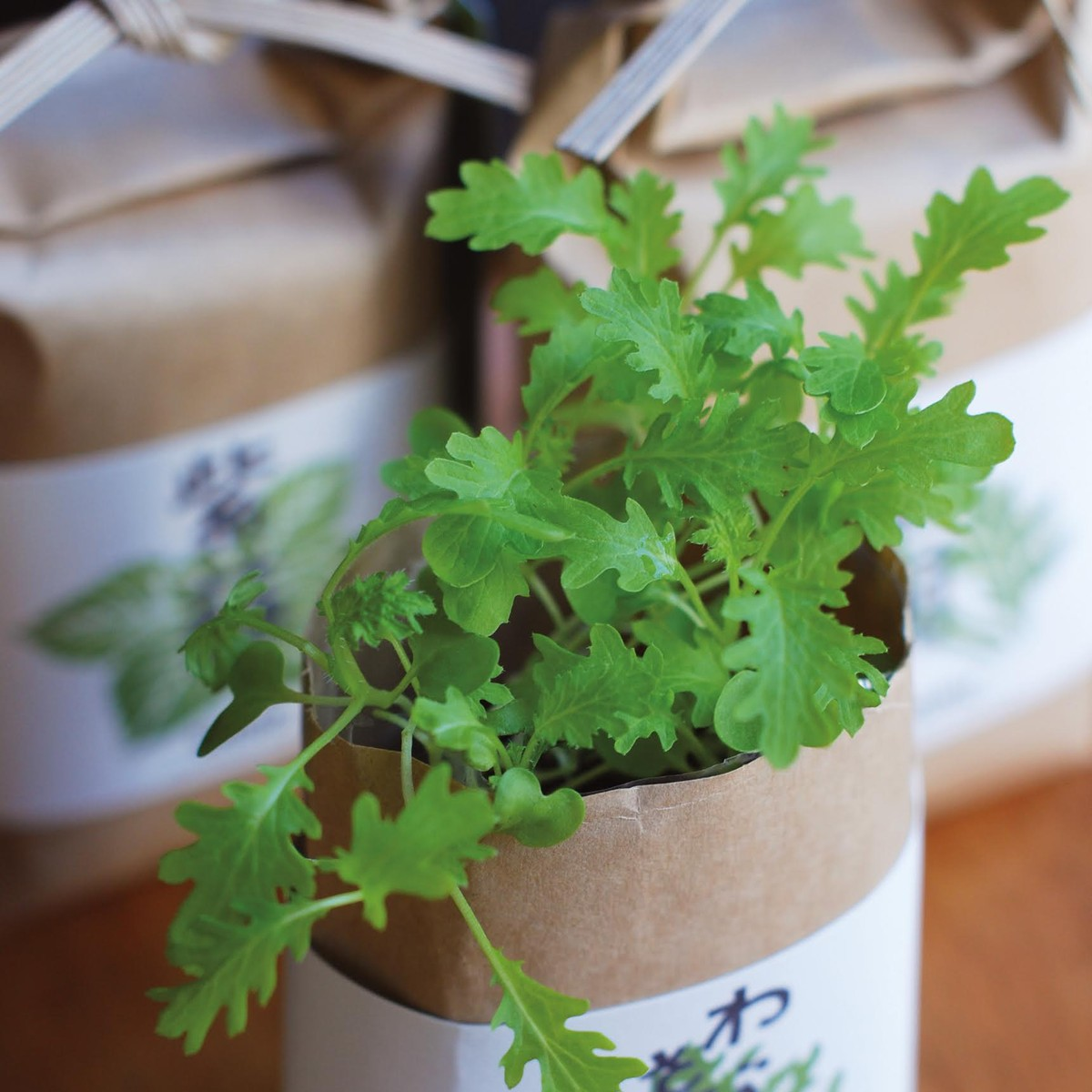 Photo of Japanese Wasabina Seeds