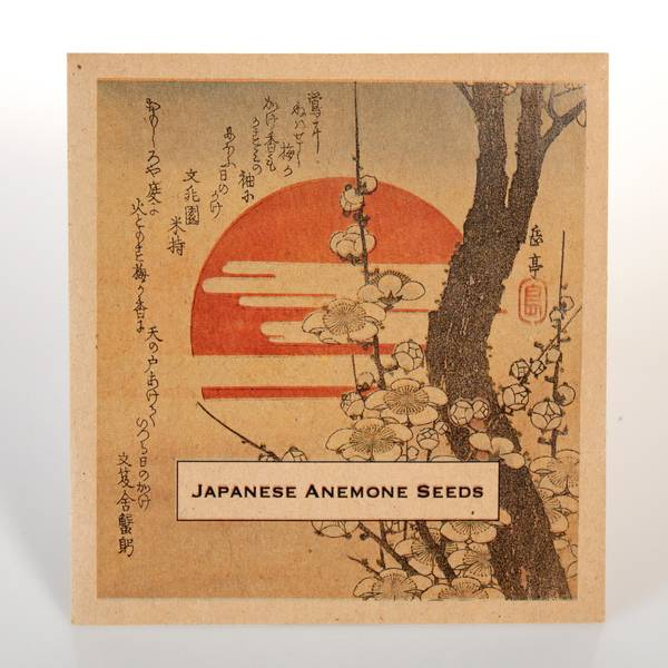 Image of Japanese Anemone Seeds