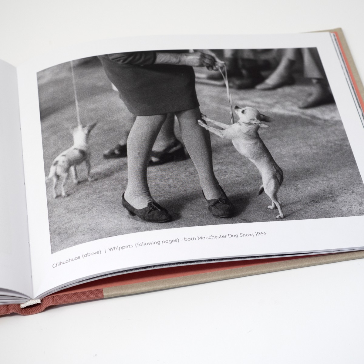 Photo of Dog Show Book 1961-1978