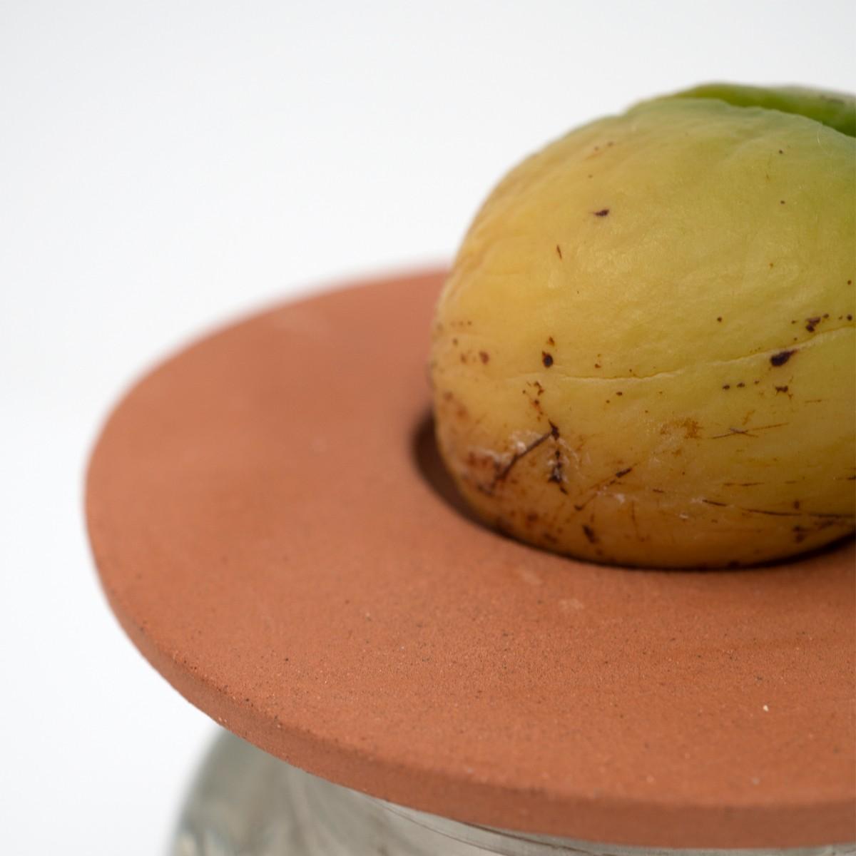Photo of Avocado Plant Starter Kit: Terracotta