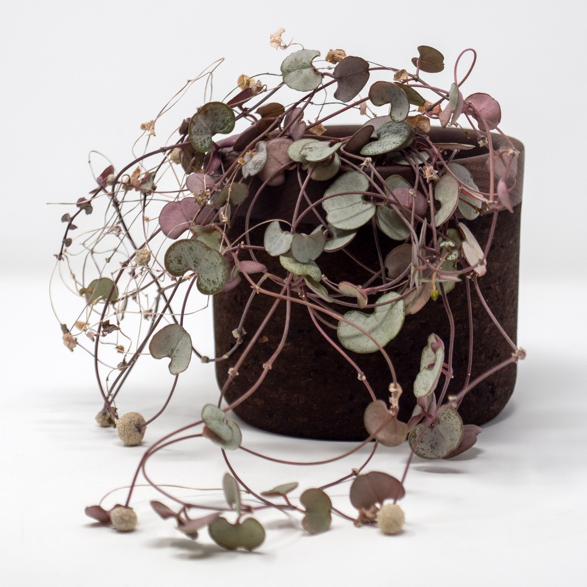 Photo of Walnut Planter