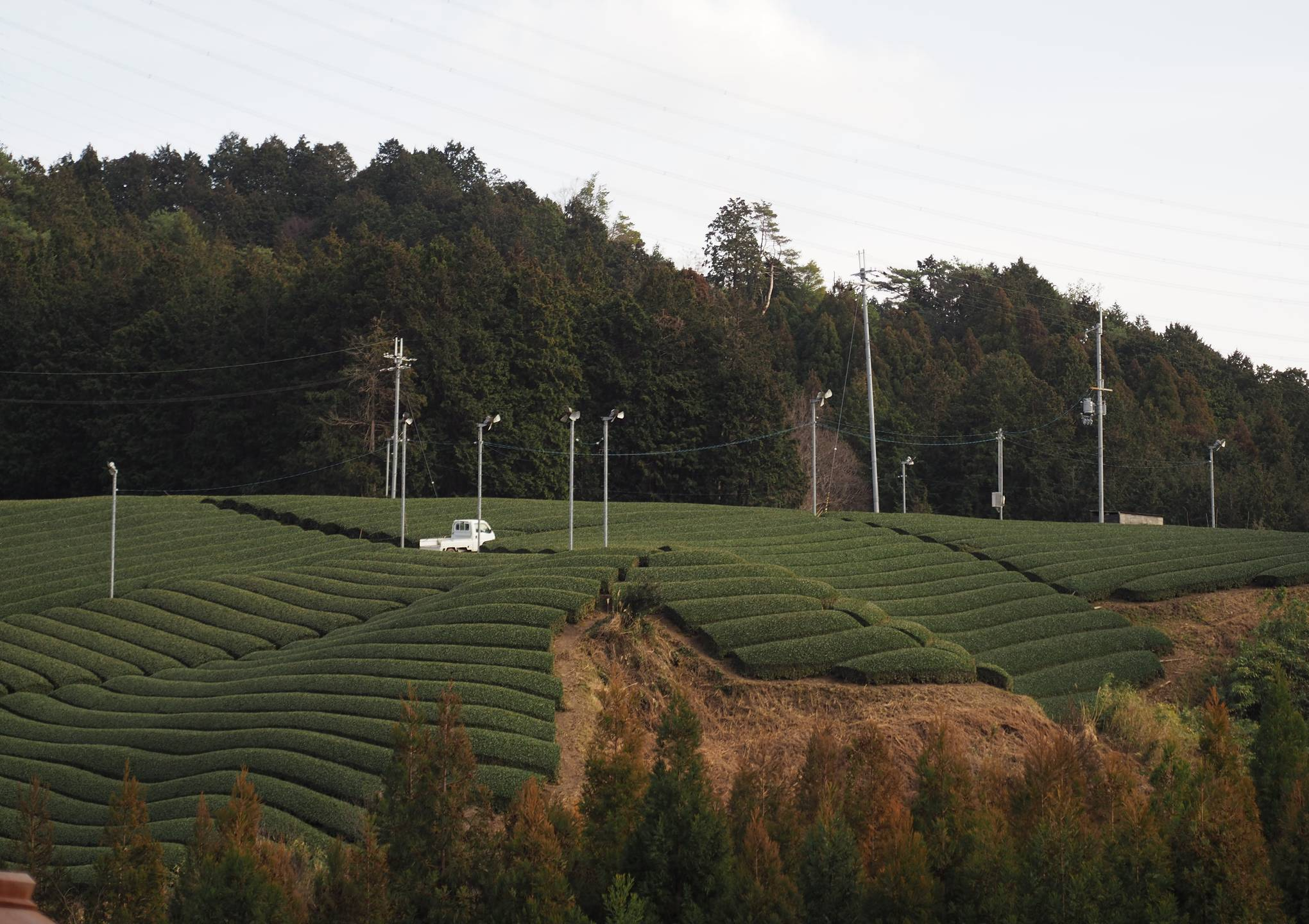 Image of From Farm to Cup: Travels to the Wazuka Tea Fields