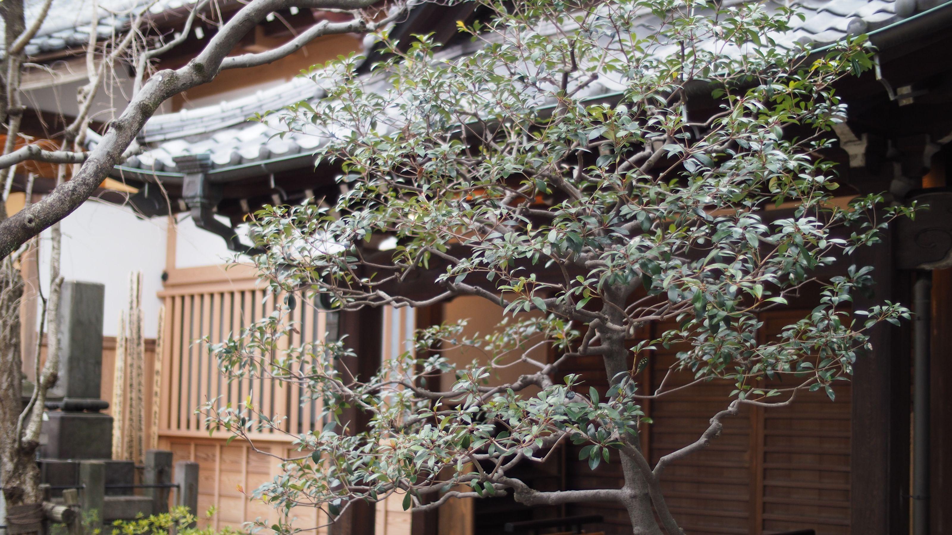 Image of Kigo | Autumnal Japanese Poetry