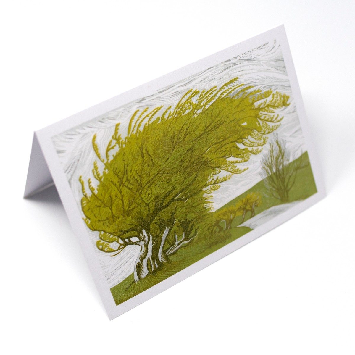 Photo of Windswept Greeting Card