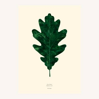 Image of Quercas Alba Print