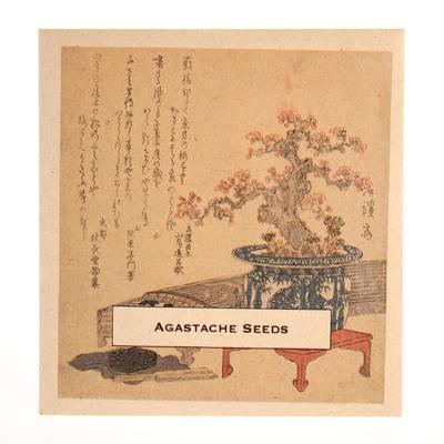 Image of Agastache Seeds